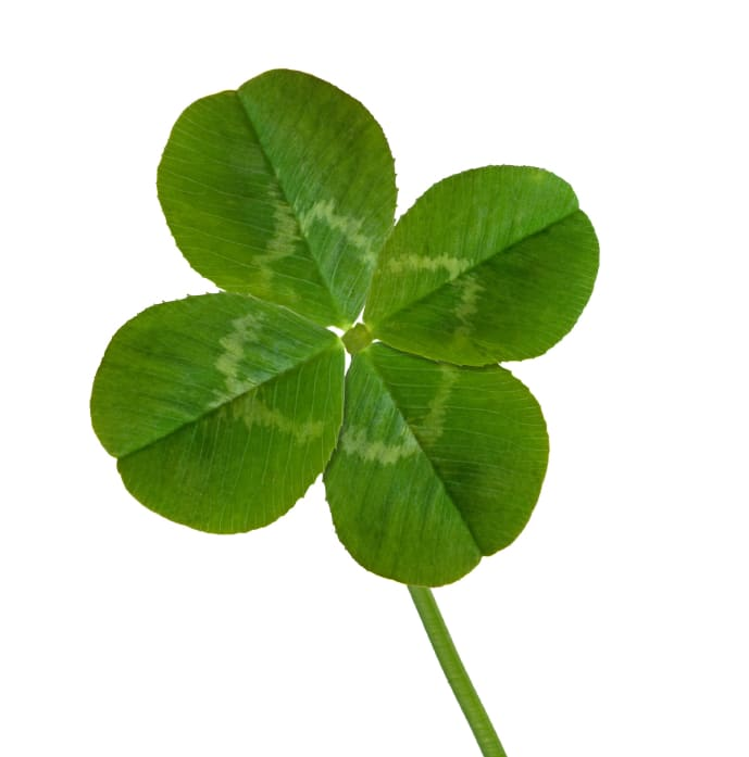 Four Leaf Clover Social Media